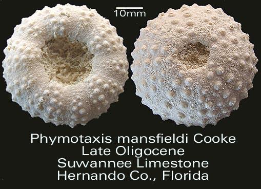 phymotaxis.jpg