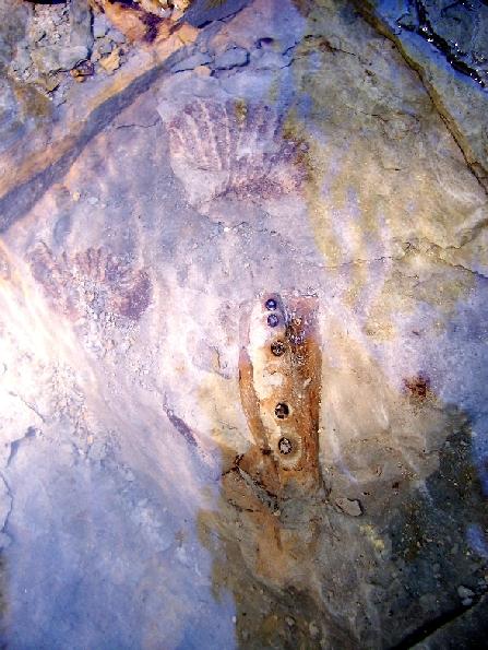 "4"" Plioplatecarpus sp. Pterygoid - Underwater"