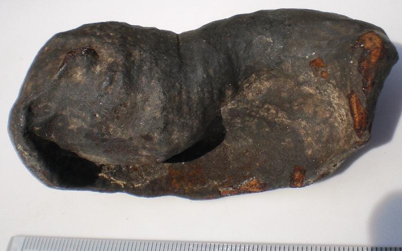 Tympanic bulla Pliocene Halifax County,NC