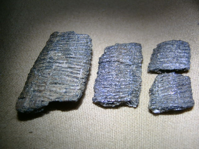 Cordaites stem pieces - Members Gallery - The Fossil Forum