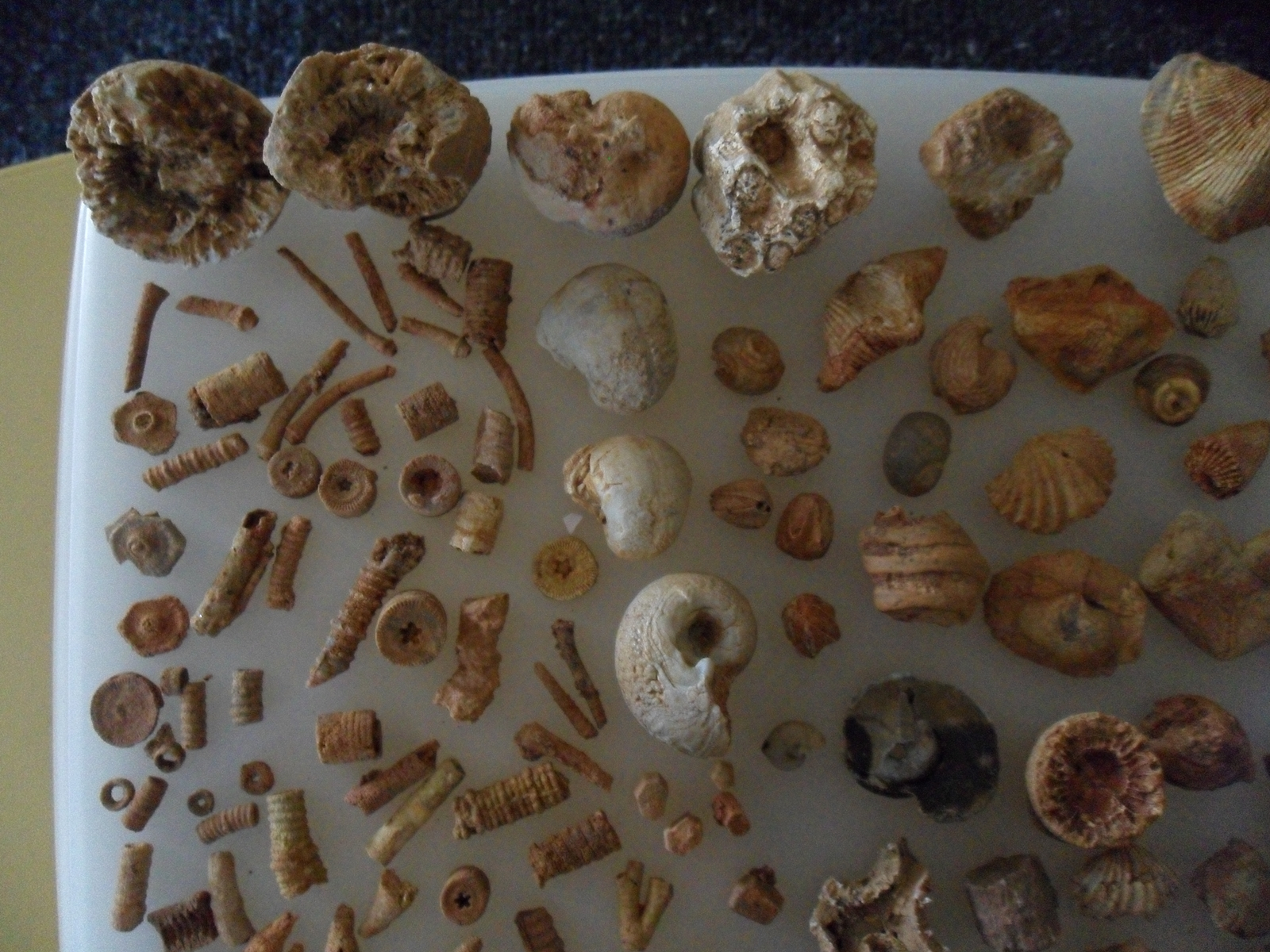 Various fossils 1