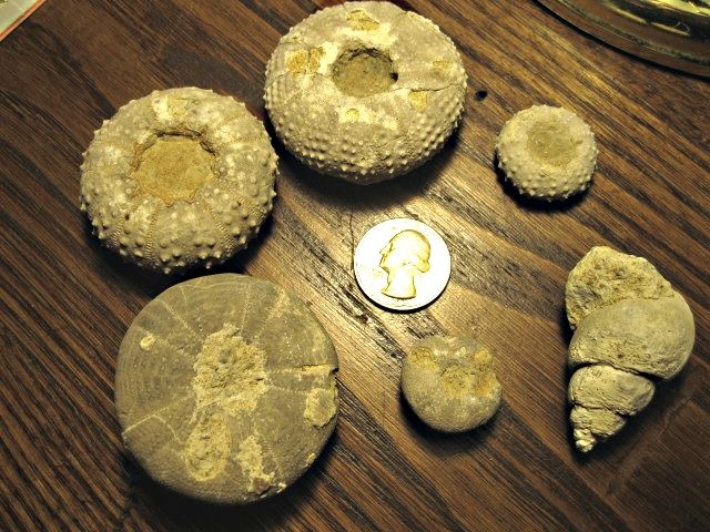 Fossil Assemblage, Kcw Site 2, SE Callahan Co., Tx (Oral)