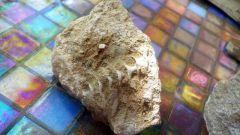 Archimedes Glen Dean Mississippian limestone