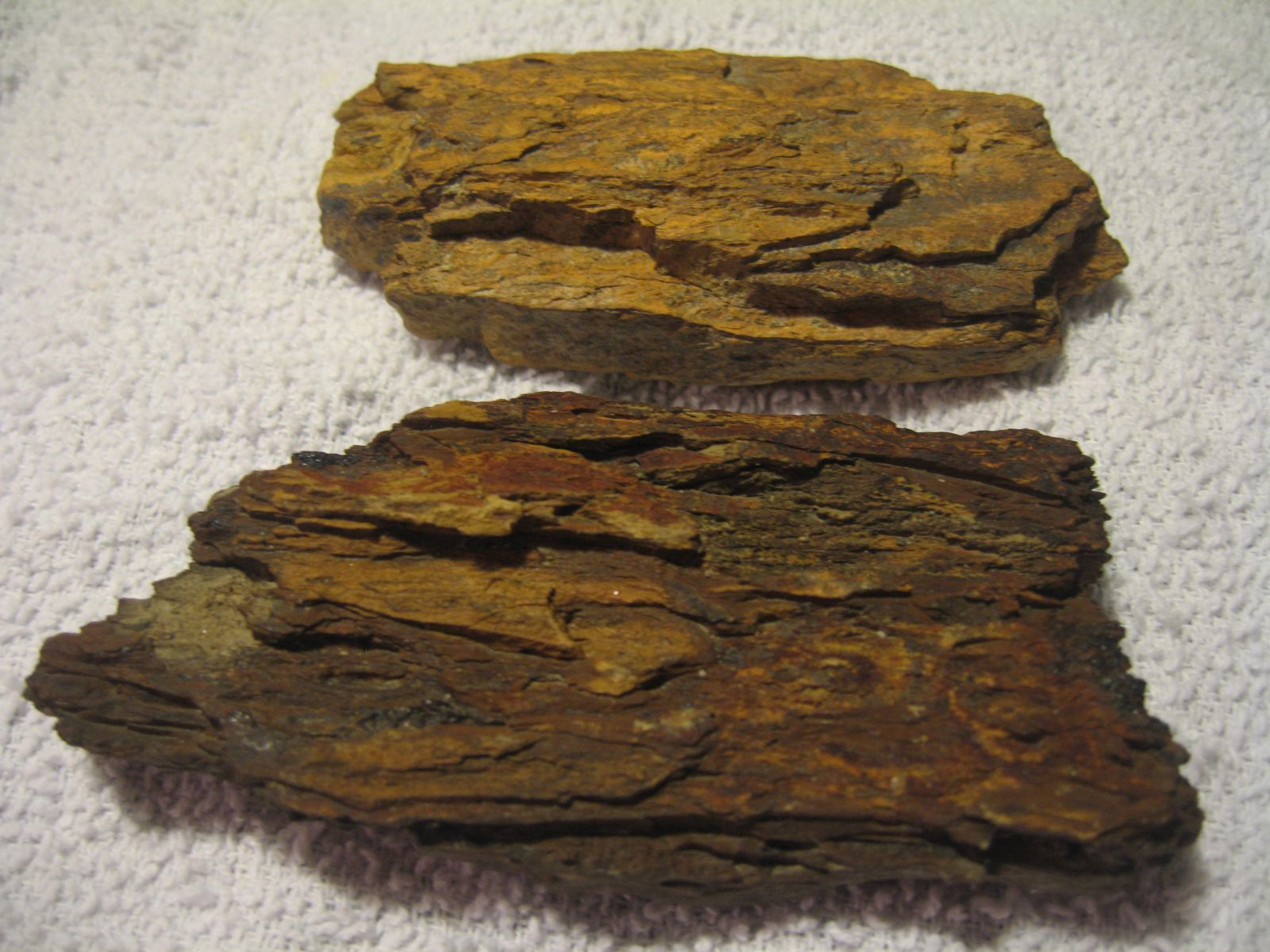 Petrified Wood - Casts