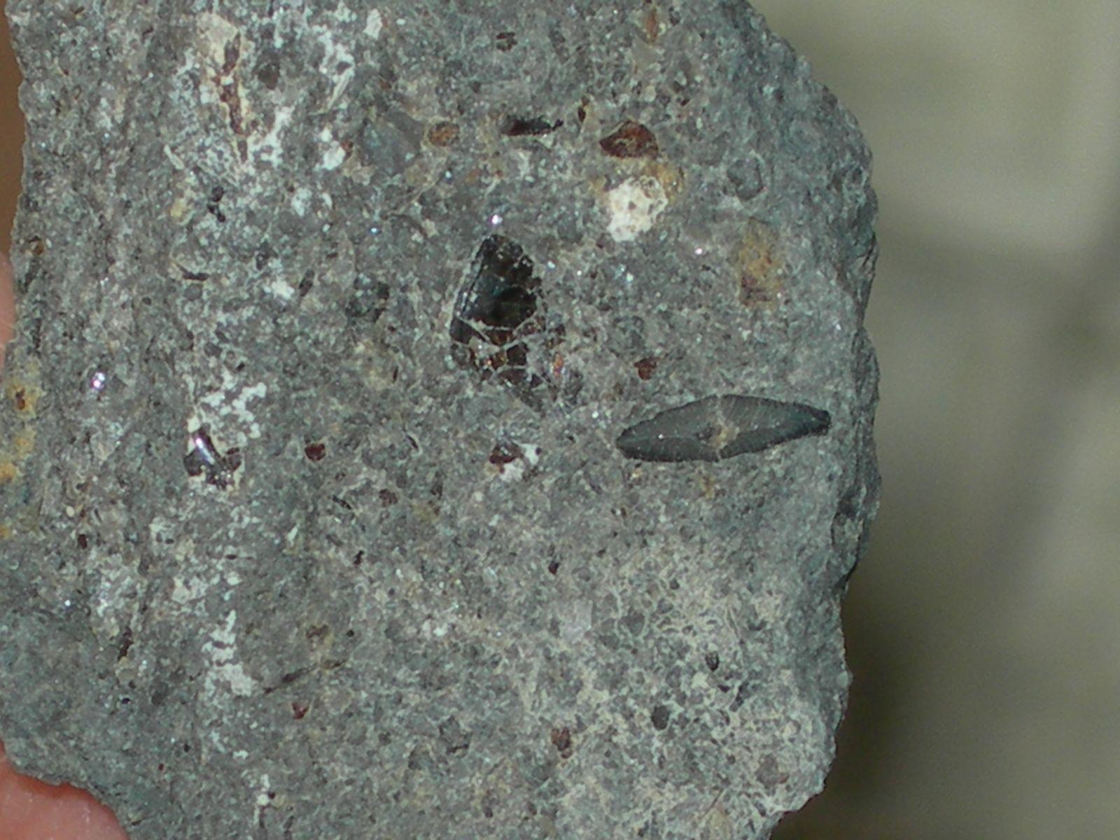 Lissodus