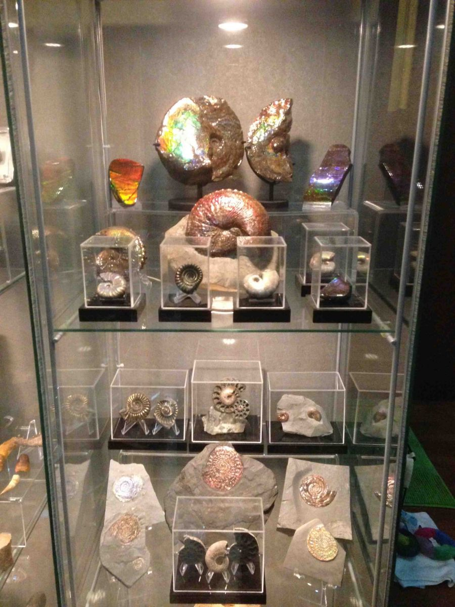 Assorted Fossils Collection 01