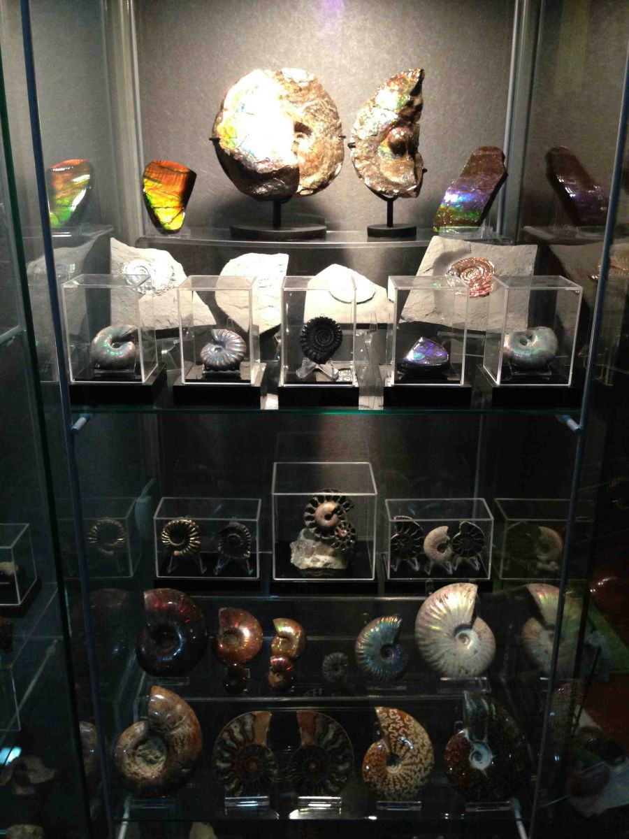 Assorted Ammonites Collection 03