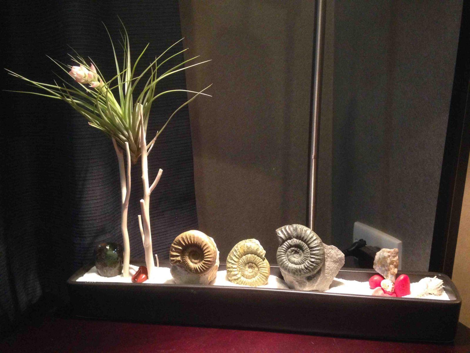 Fossil Mineral Zen Garden