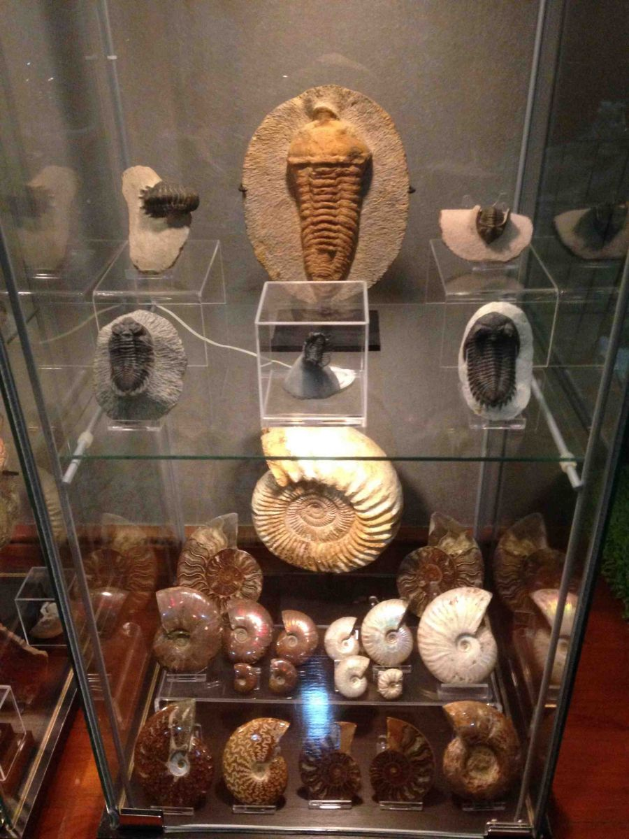 Assorted Fossils Collection 02