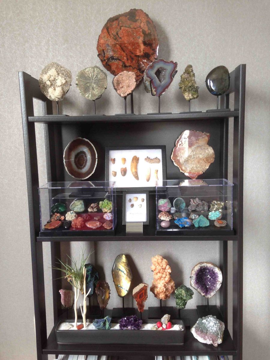 fossils & geological cabinet of curiosity