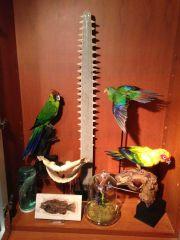 Natural Curiosities Collection