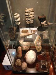 Assorted Fossils Collection 04