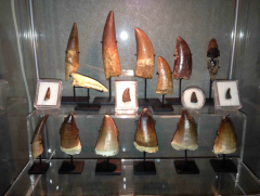 Dino & Reptile Teeth and Claw Collection