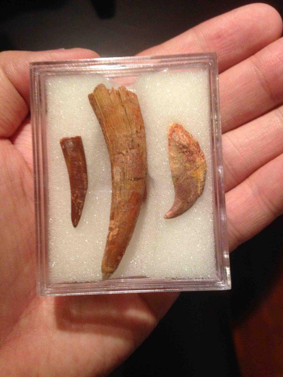 Pterosaur Collection