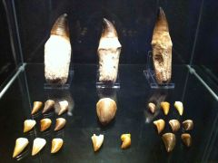 Mosasaur Collection 01