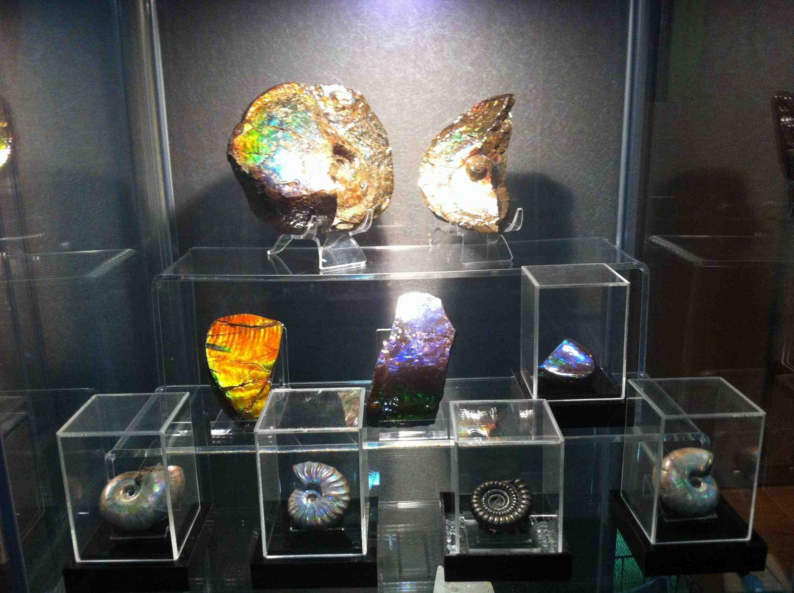 Ammolites & Ammonites Collection