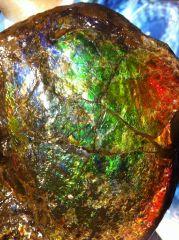 Ammolite Ammonite (Placenticeras Meeki) - 02