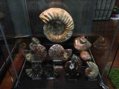 Madagascan Ammonites