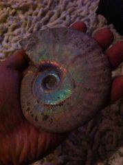 Cleo Opal (10 cm) 04 - low light iridescence