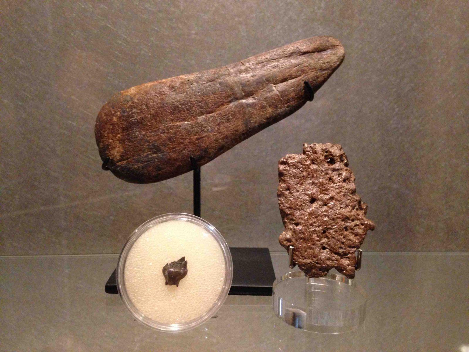Ankylosaur Collection