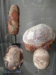 Dino Eggs Collection