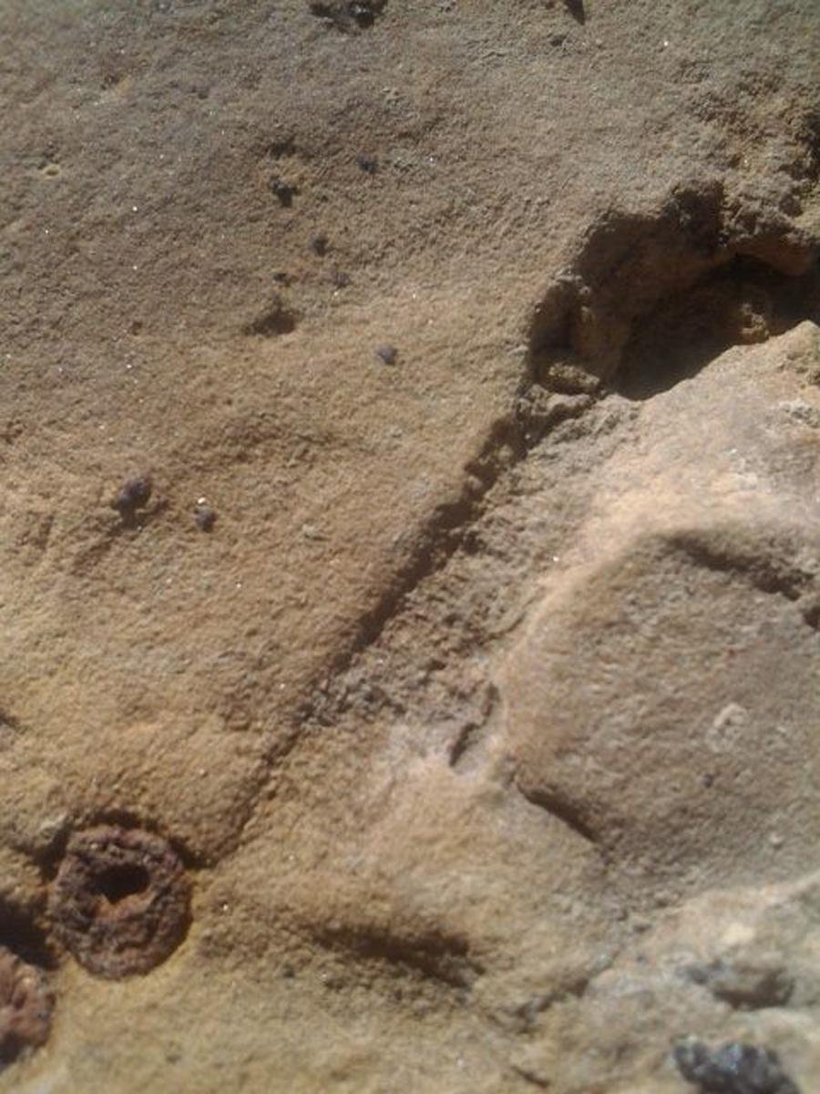 Crinoid Mold