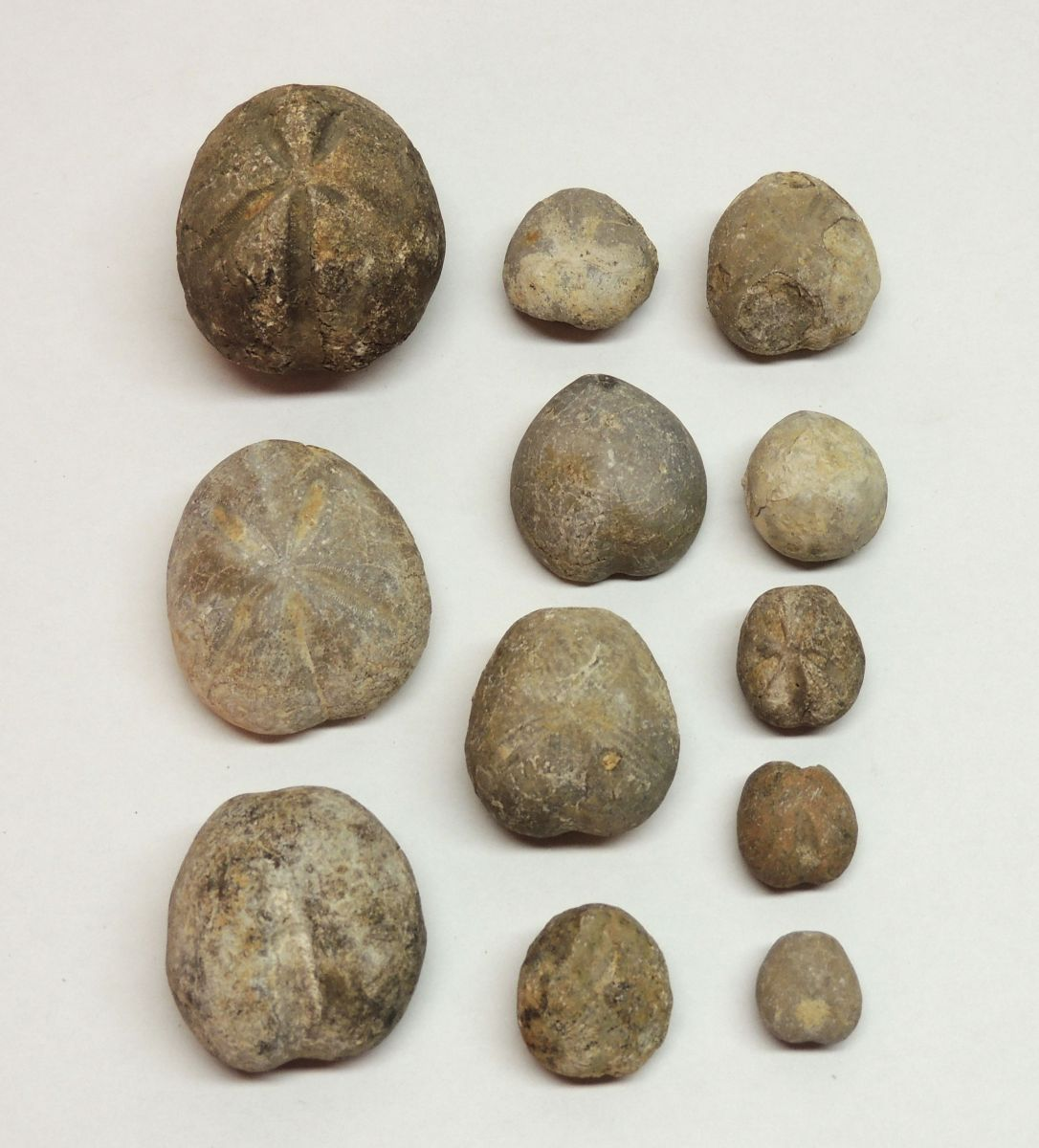 Various Urchins