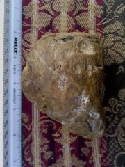 Tennessee Amber. State record #3