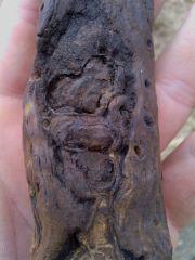 Unidentified Paleobotanical Pic 2