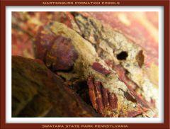 Swatara State Park Fossils 0040 framed