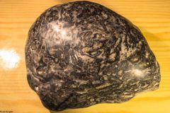 Bryozoa, Graptolites encrusted rock - Top View