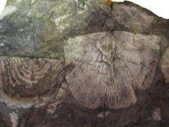 Lower Devonian