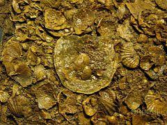 Lower Devonian Brachiopod Coquina, Glenerie, NY