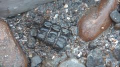 Fossils From Lyme Regis And Charmouth