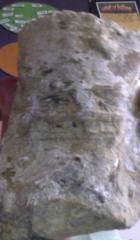 Stromatalite NSW Australia