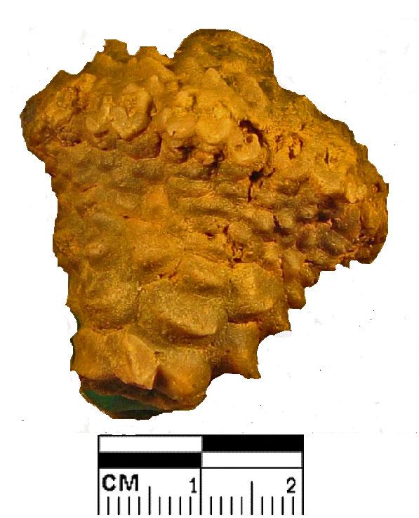 E 319 Miss Teleocrinus umbrosus