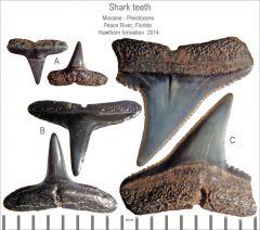 Peace River micro fossils