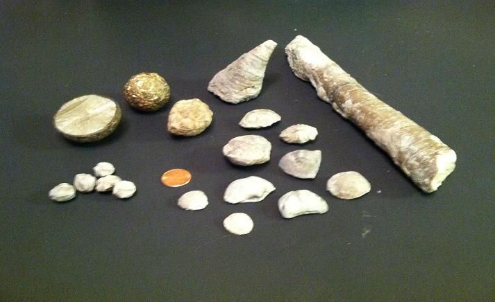 Assortment of Fossil From Giles Counry Tennessee