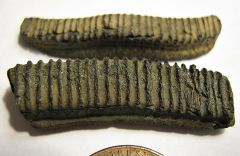 Paleocene ray plate fragments from Aquia Formation (Maryland)