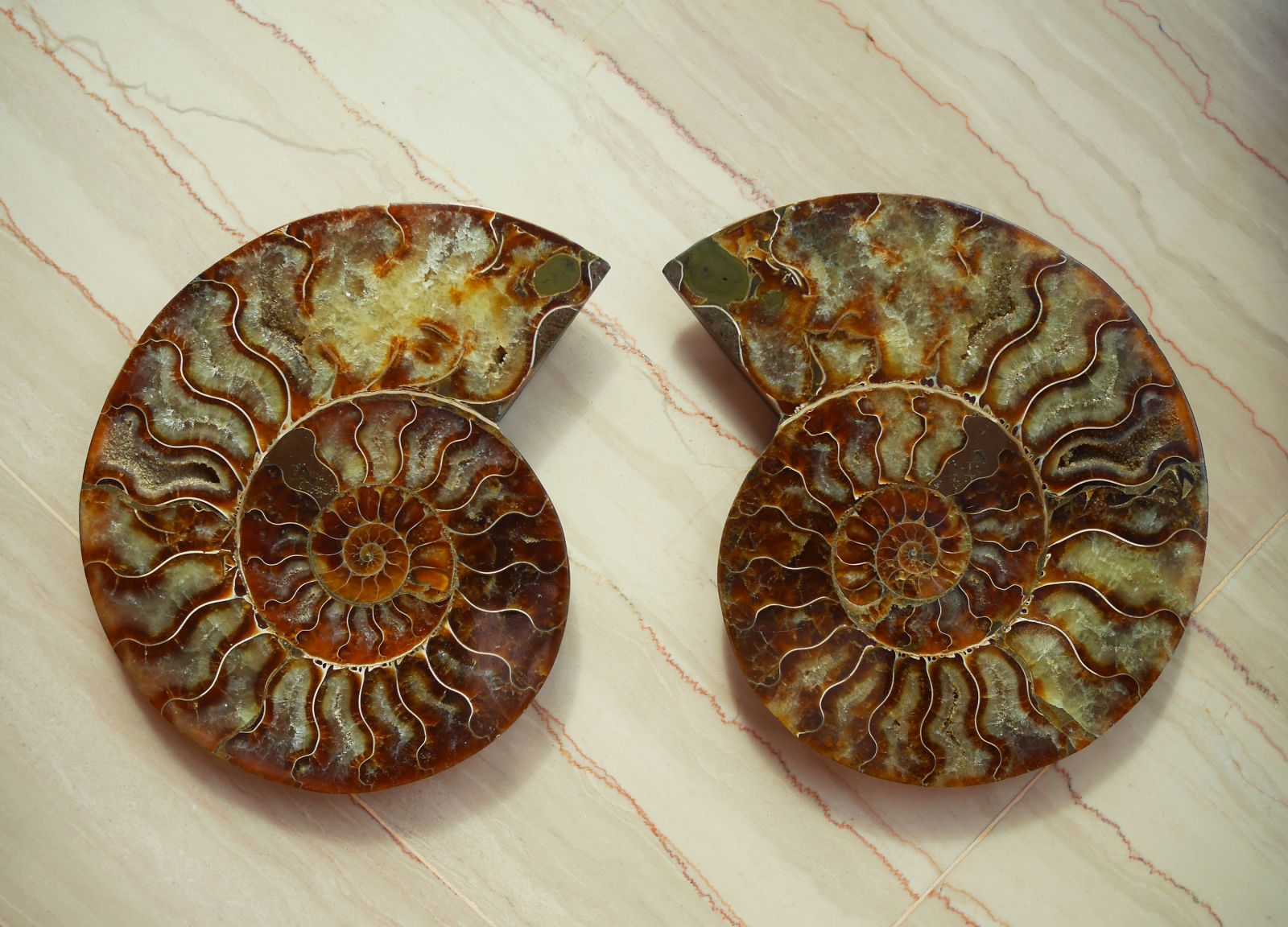 Sliced Ammonite with crystals