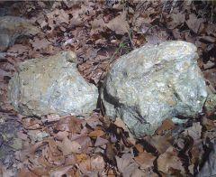 Don't think they are rocks...