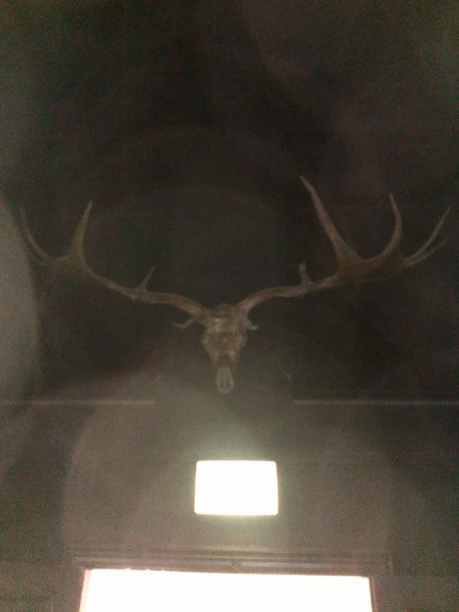 Giant Deer skull hidden in the dark.
