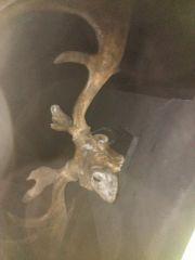 Giant Deer skull at my local Museum.
