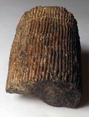 icycatelf's Backyard Fossils