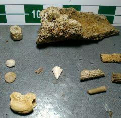 Latest Cretaceous finds.
