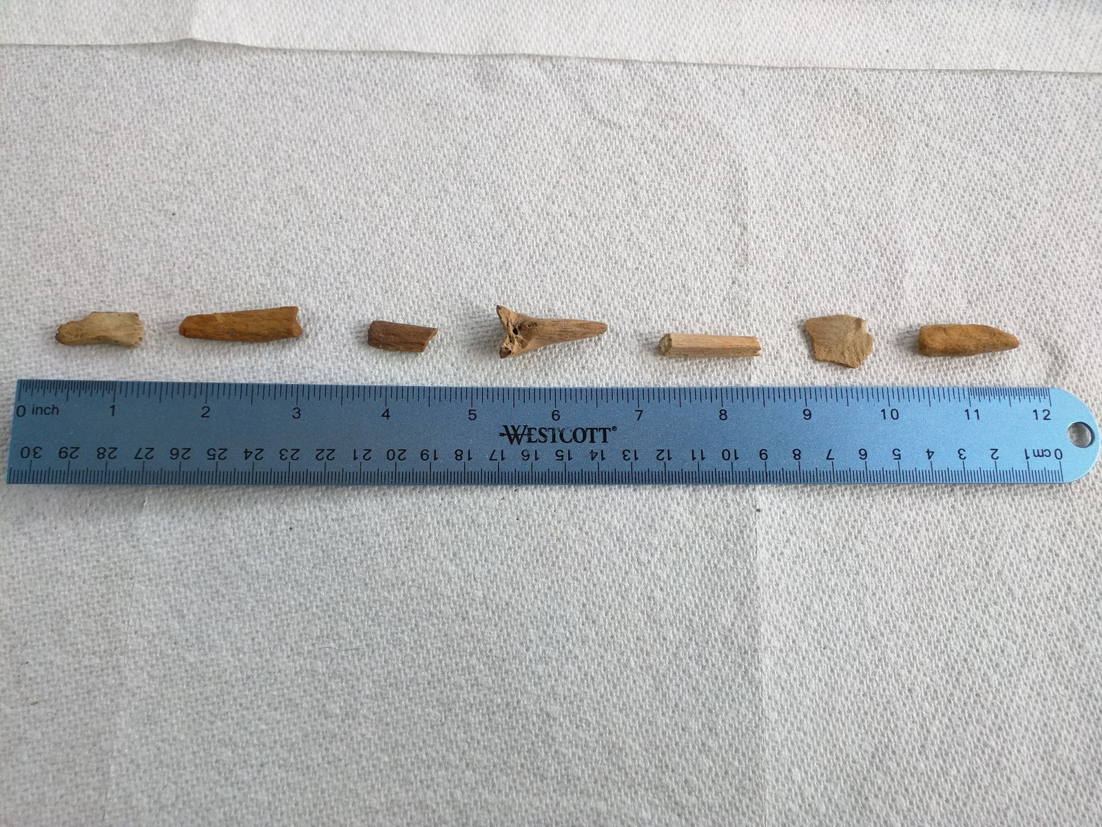 Bone Fragments