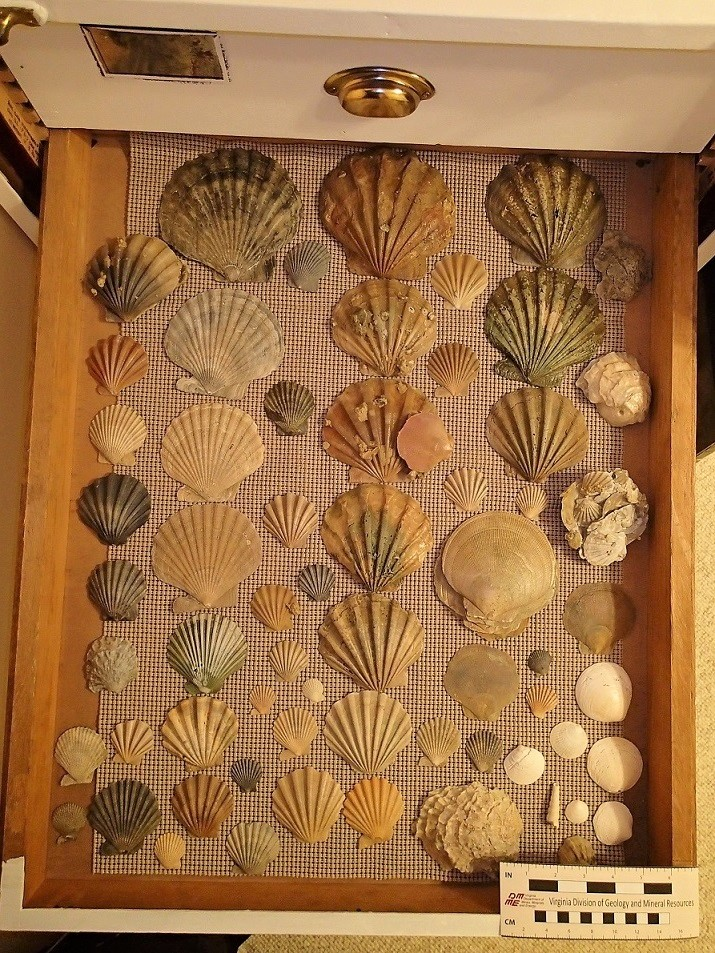 Case 1 Shell Drawer 1