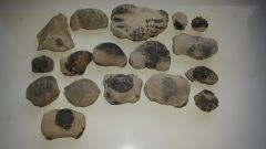 Selection of Sheppey crab nodules