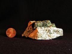 Amplexus Coral Fragment
