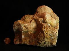 Brachiopod 3